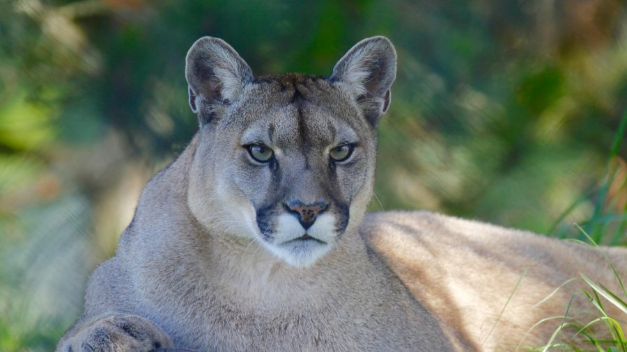 8-Year-Old Recalls Moment Mountain Lion Attacked Him in Colorado