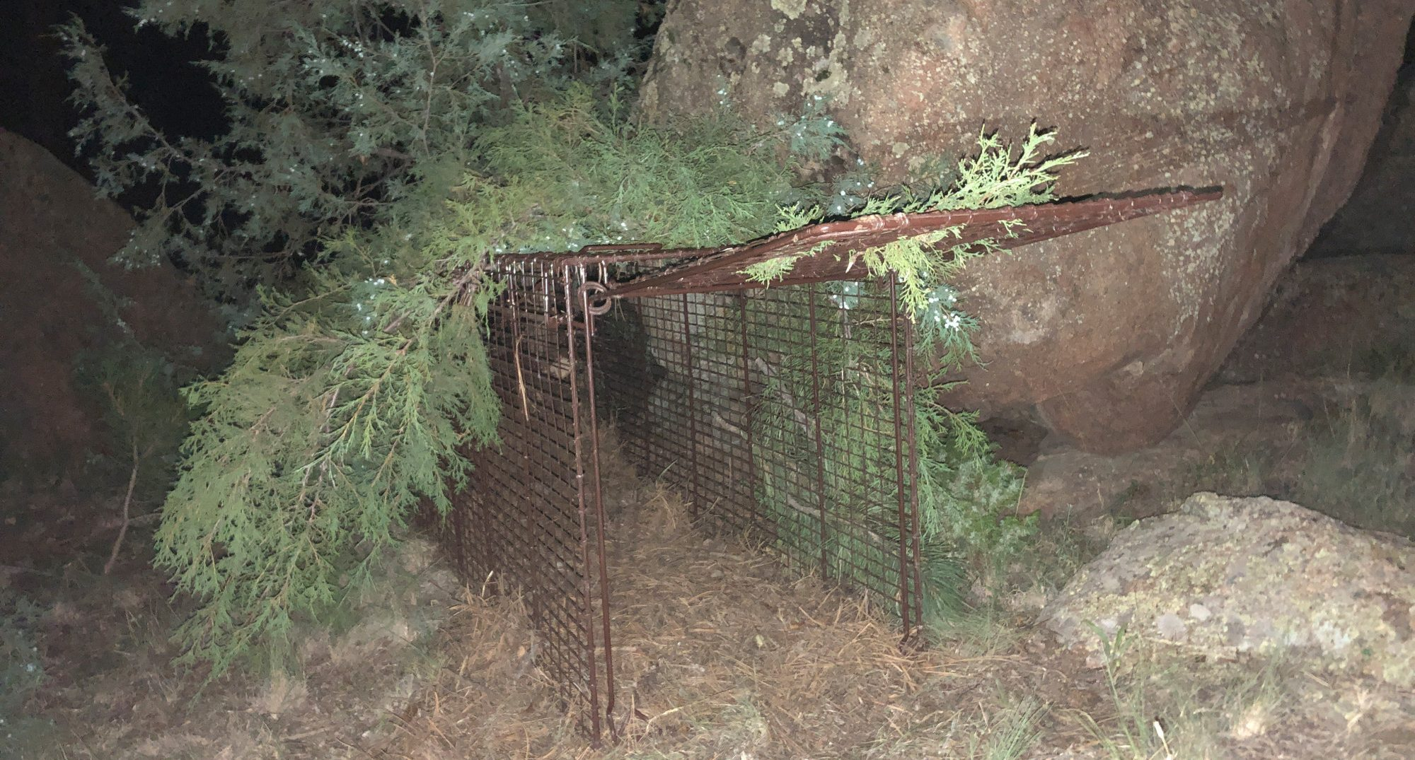 Wildlife officers set a trap