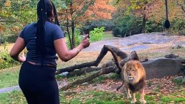 The Woman Who Taunted a Lion at the Bronx Zoo Has Been Identified