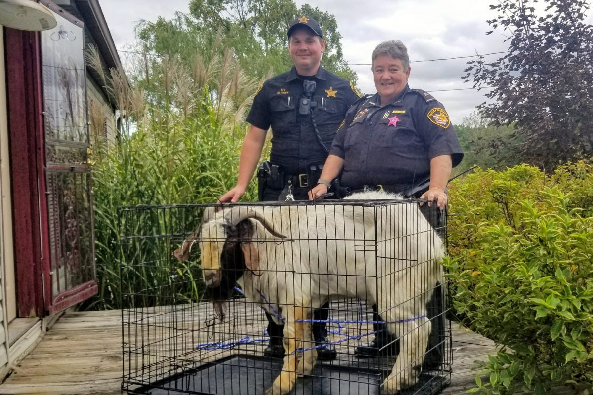 Ashland County sheriff's deputies pose with a goat