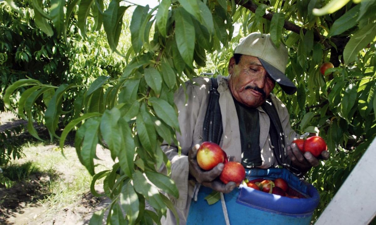 Pesticide Ban-Picking Apples