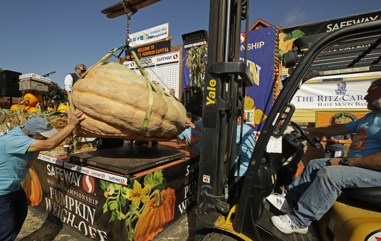 A massive pumpkin grin by Leonardo Urena of Napa, Calif., is lowered on a scale with a forklift on Monday, Oct. 14, 2019, in Half Moon Bay, Calif. The pumpkin weighed in at 2,175 lbs., a new California weight record. (Ben Margot/ AP Photo)