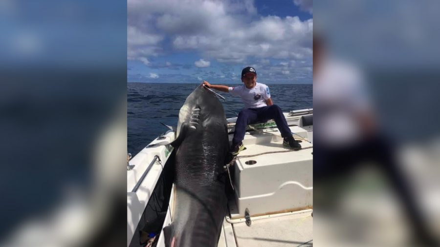 Boy, 8, Weighs 88 Pounds and Managed to Catch a 692-Pound Tiger Shark