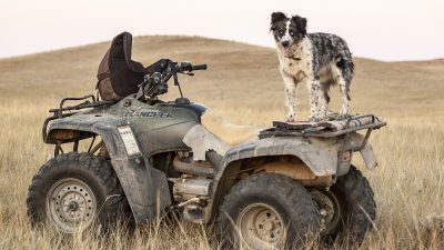 Dog Runs His Owner Down With His ATV in Alabama