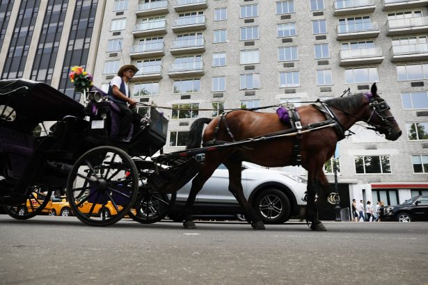 NYC Bill Would Prohibit Horses From Working on Hot, Humid Days