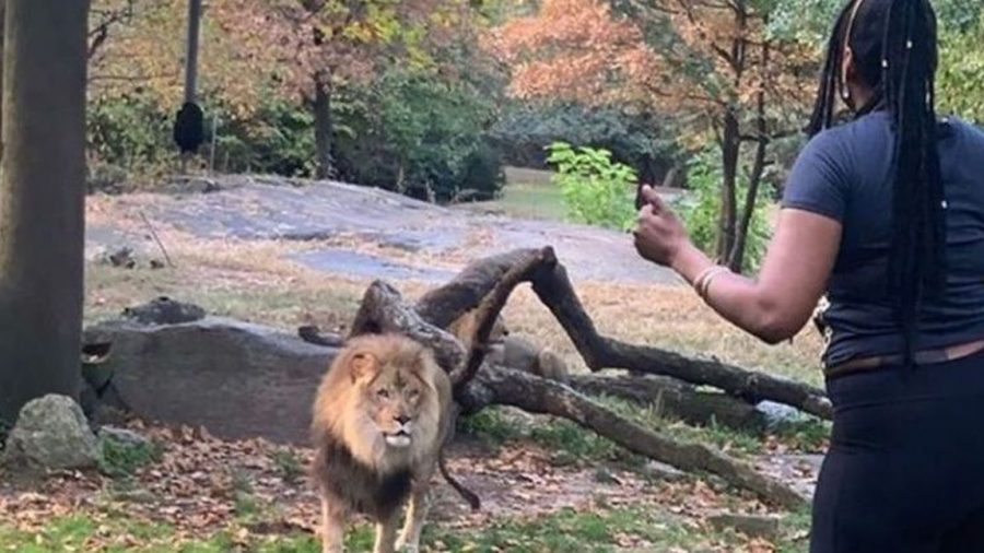 Woman Arrested in Connection With Entry Into Lion Enclosure at Bronx Zoo, Police Say