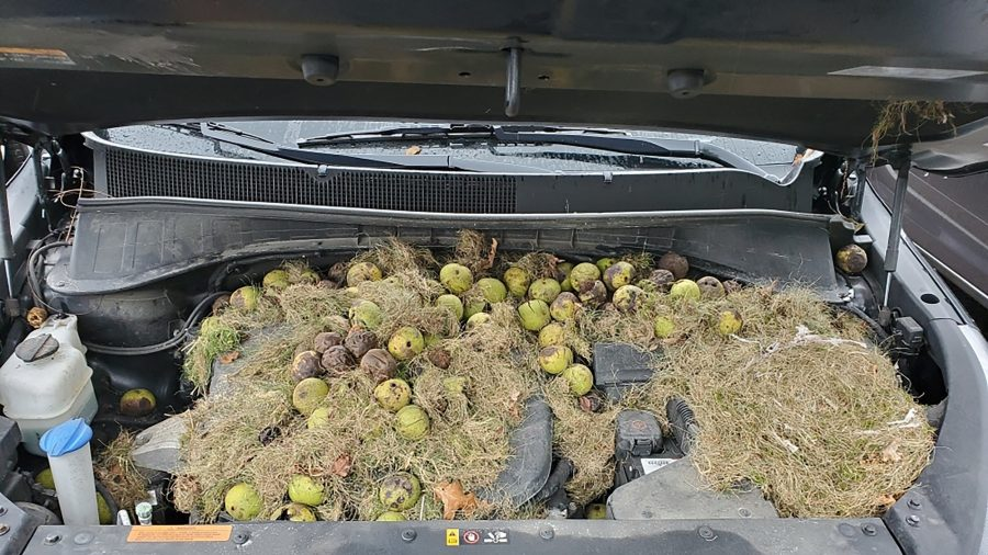 What Happened to This Car Is Nuts—200 Walnuts, to Be Exact