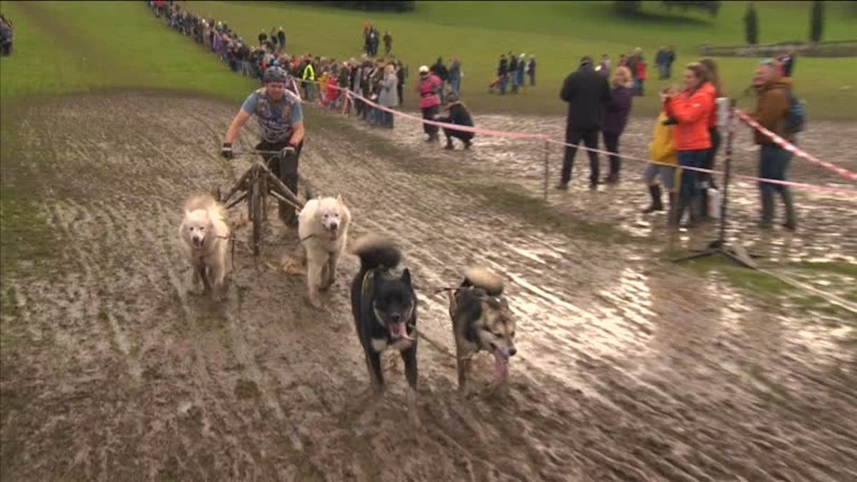 Muddy Conditions Add to the Fun for Dry-Land Dogsledders