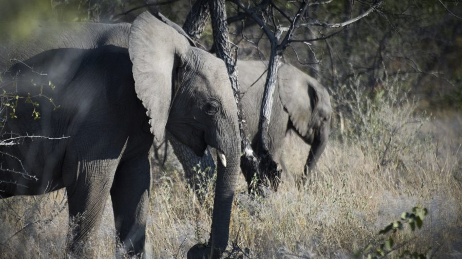 Australian Tourist Killed by Elephant in Namibia