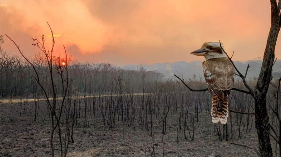 Total Fire Bans in Australia's Most Populous State Amid Almost 150 Blazes