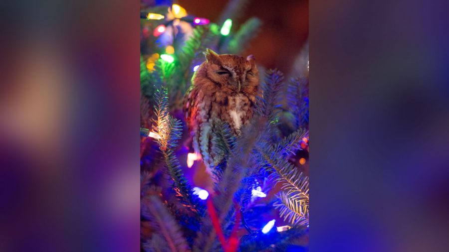 Family find surprise in their Christmas tree