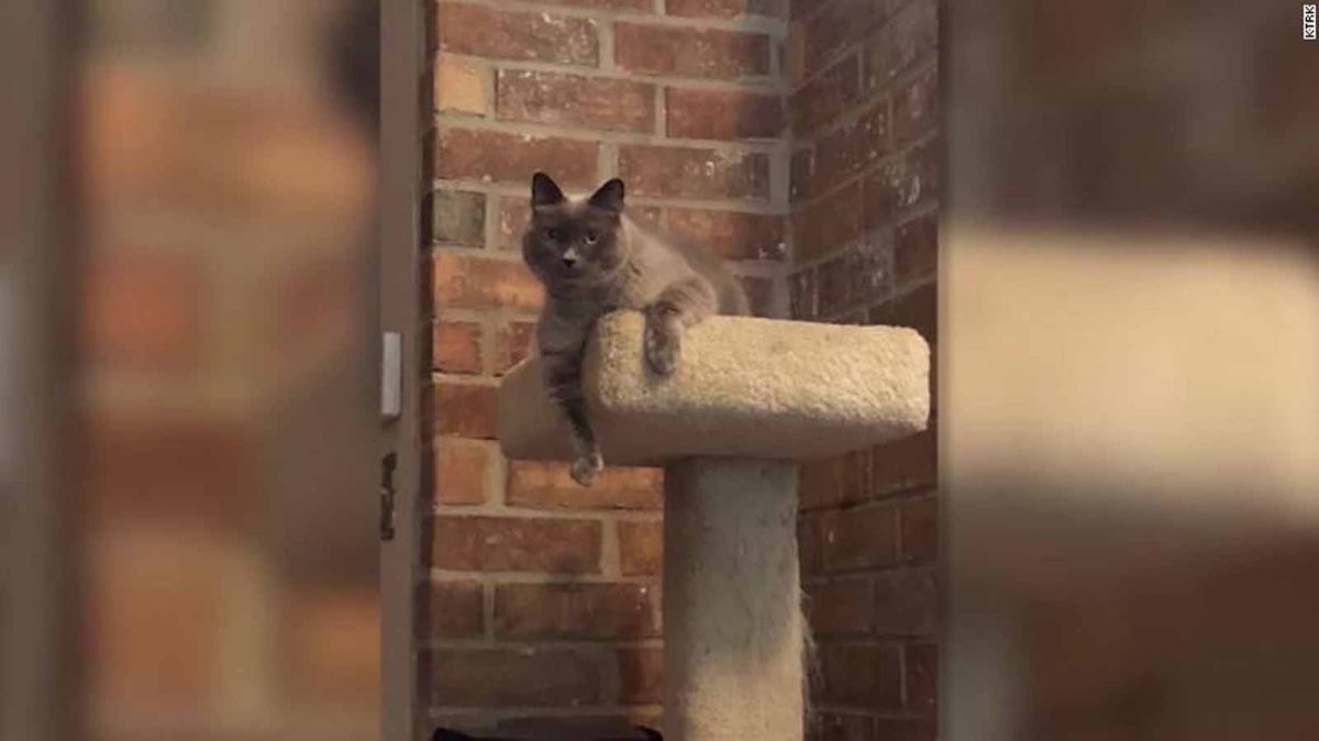 Texas Family Says Vet Accidentally Euthanized Their Cat During Routine Visit