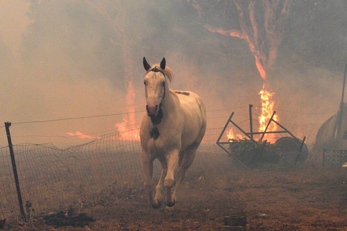 A horse tries to move away