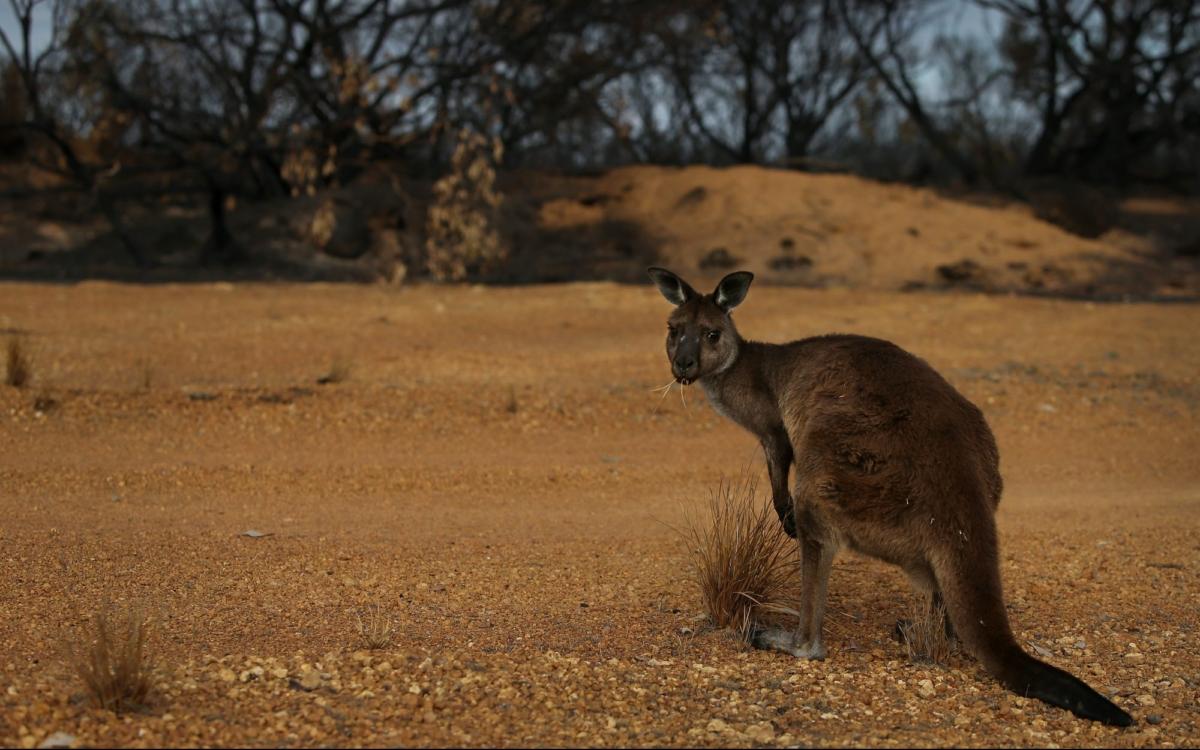 Kangaroo island fires