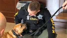 Pit Bull Rescued From a Dog Fighting Ring Gets a Job on the Police Force