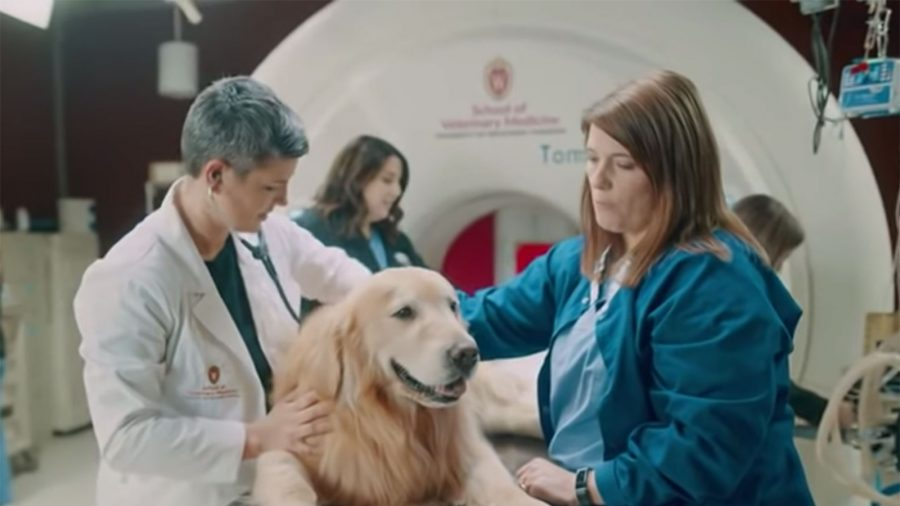 Dog Lover Funds $6 Million Super Bowl Ad for the Vet School That Saved His Pet's Life