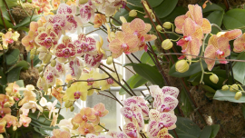 Bold, Beautiful Adventure at the 2020 NYC Orchid Show