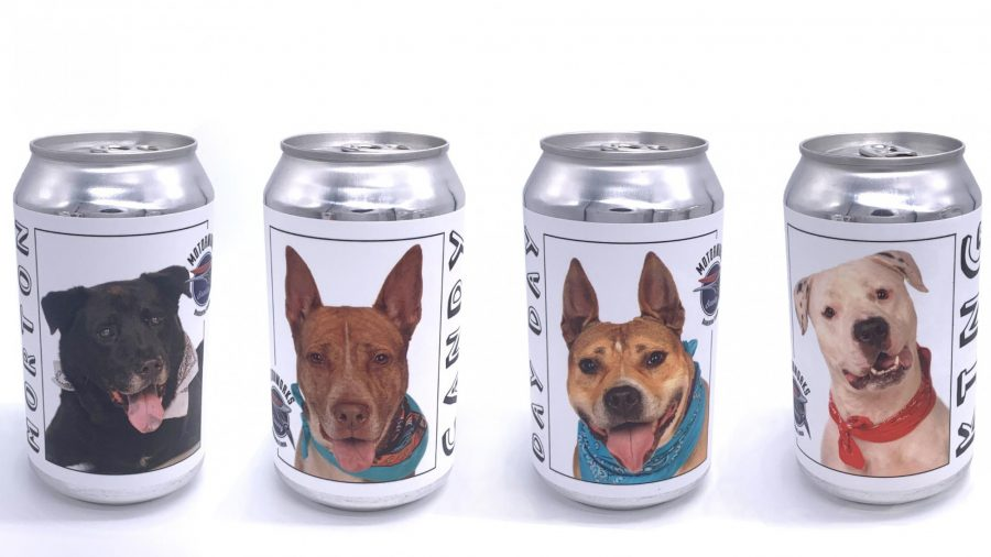 A Woman Finds Her Long Lost Dog After Seeing Her Picture on a Beer Can