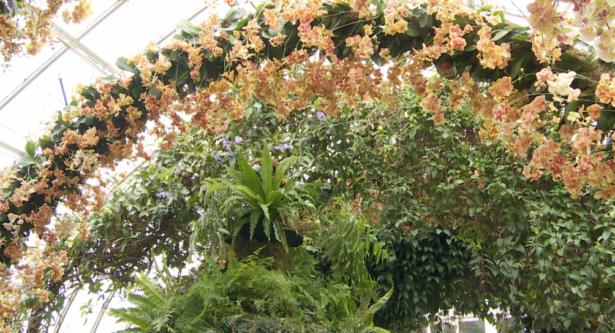 Orange Flower Arc