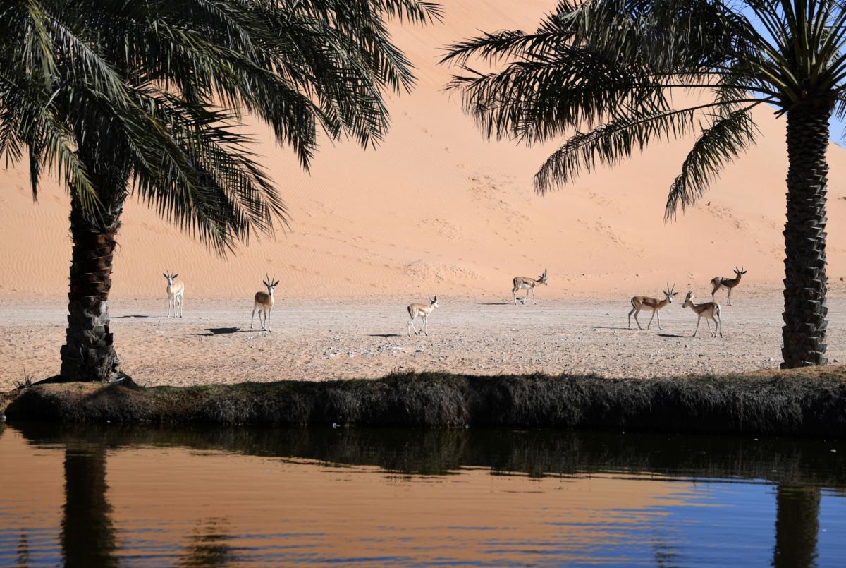 TOURISM-DESERT-UAE