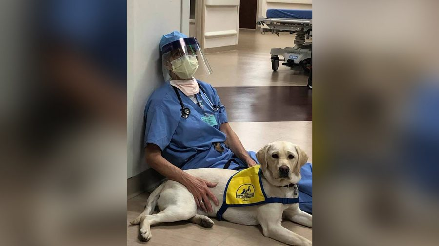 A Therapy Dog Brings Comfort to ER Doctors on the Frontlines