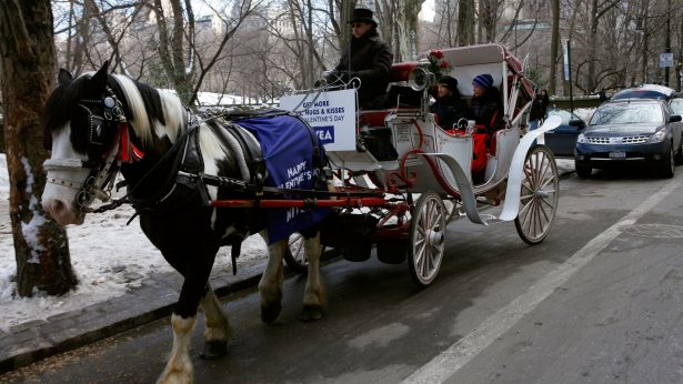 Animal Rights Activists Angry Over Video of Horse Collapsing in Central Park
