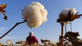 US Bans Cotton Imports From China Producer