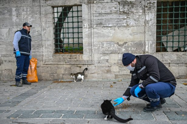 members of Istanbul Metropolitan municipality feed stray cats