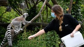 Paris Zoo Reopens With New Residents