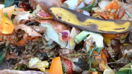 Vermont Bans Food Scraps From Trash, Authorizes Composting