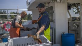 European Union Lifts Tariffs on American Exports of Lobster