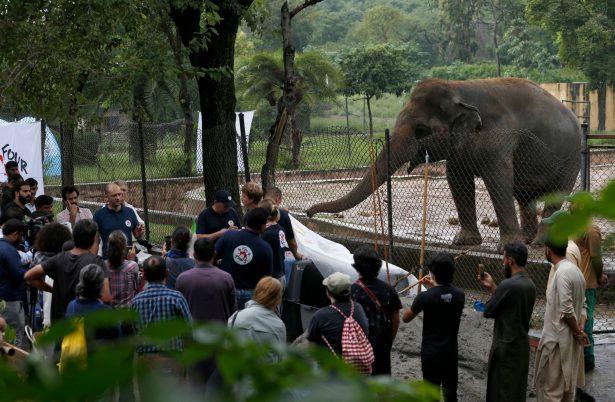 'Four Paws' briefs media prior to examining an elephant 'Kaavan'