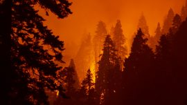 West Coast Wildfires Cause 20 Times More Damage Than Previous Year